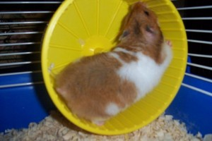 hamster wheel, busyness